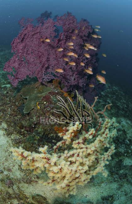 Escena de arrecife con coral y peces - foto de stock