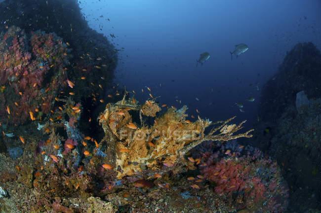 Scène récifale avec coraux et poissons — Photo de stock