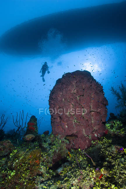 Diver and barrel sponge — Stock Photo