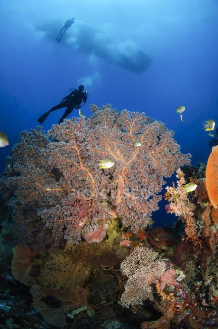 Ныряльщики, плавание через море поклонников — стоковое фото