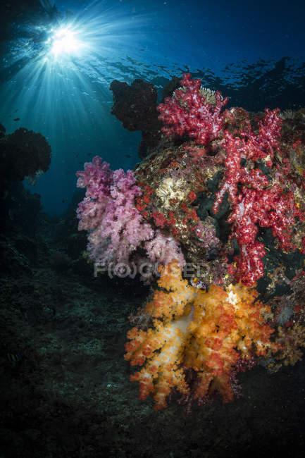 Corail doux et coup de soleil à Raja Ampat — Photo de stock