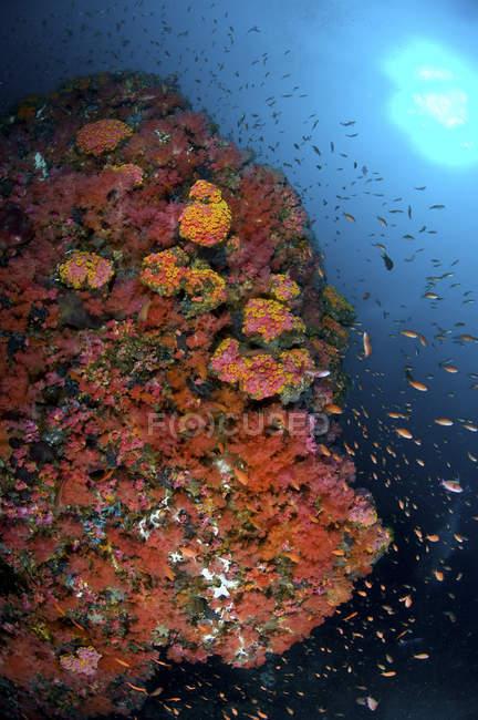 Escena de arrecife con corales y peces - foto de stock