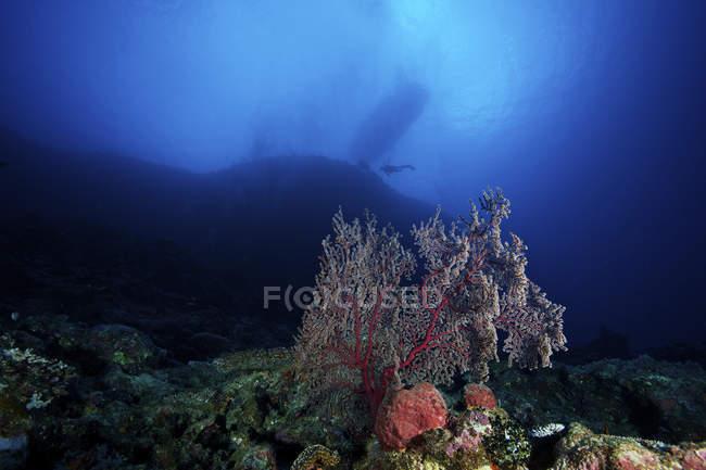 Riff-Szene mit Gorgonien Ventilator — Stockfoto