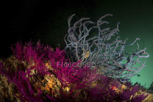 Мягкие кораллы в темной воде — стоковое фото