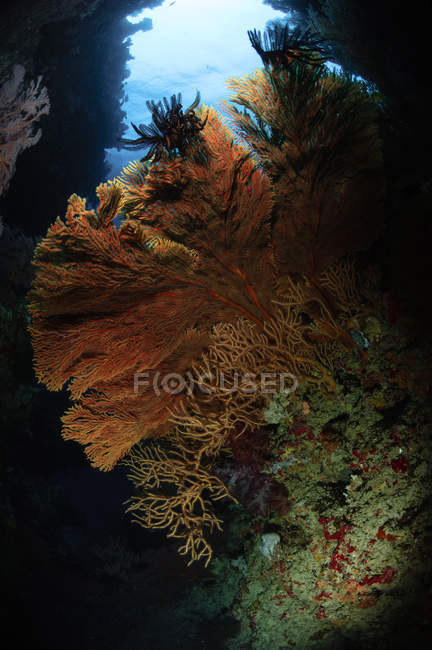 Sea fans reefscape — Stock Photo