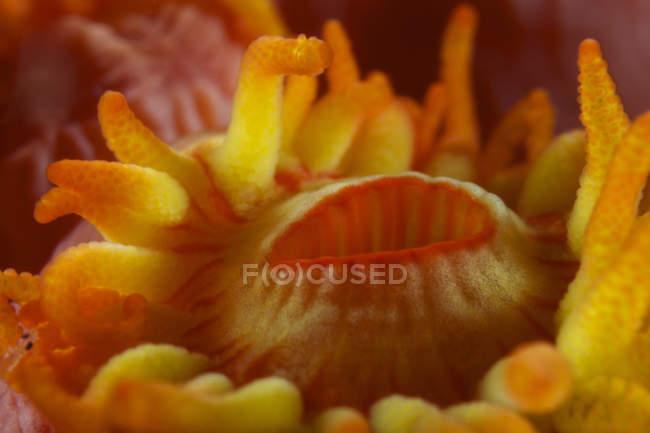Tube jaune bouche polype corail — Photo de stock