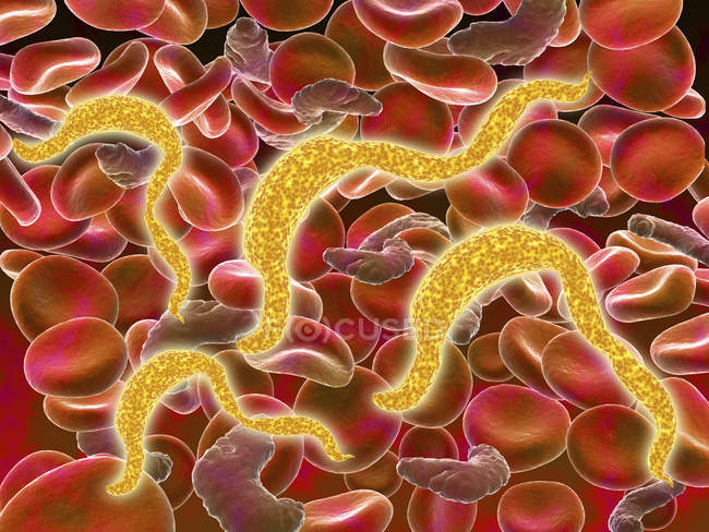 African trypanosomiasis parasitic infection in the red blood cells — Stock Photo