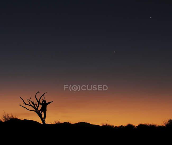 Людини, піднявшись на голі дерева на заході сонця — стокове фото