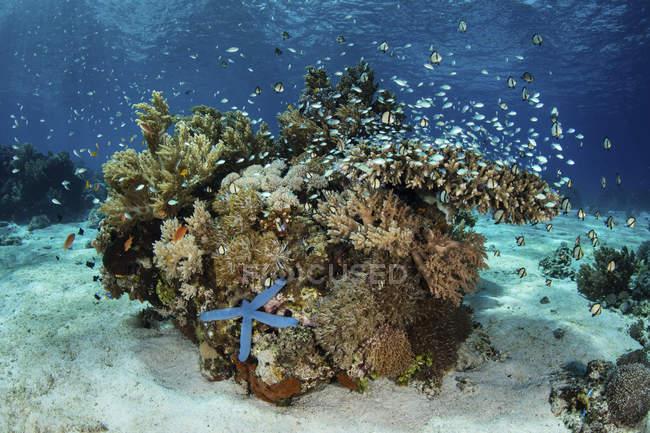 Recifes de corais perto de Alor — Fotografia de Stock