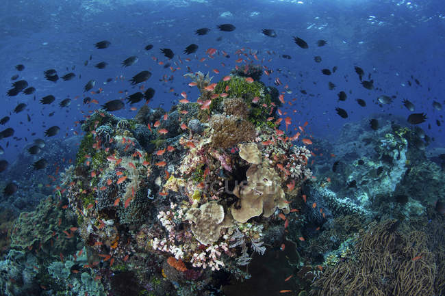 Arrecife de coral cerca de Alor - foto de stock