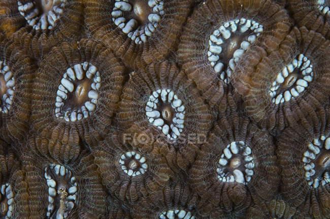 Reef-building coral closeup shot — Stock Photo