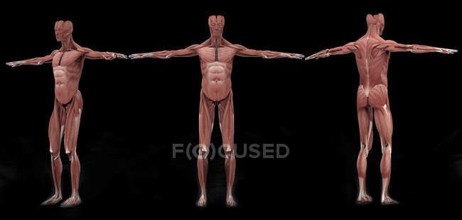 3D рендеринг мужской мышечной системы на черном фоне — стоковое фото