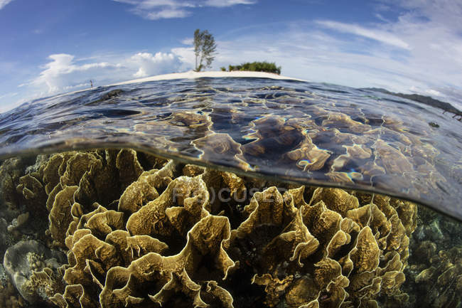 Feuerkorallen wachsen in flachem Wasser — Stockfoto