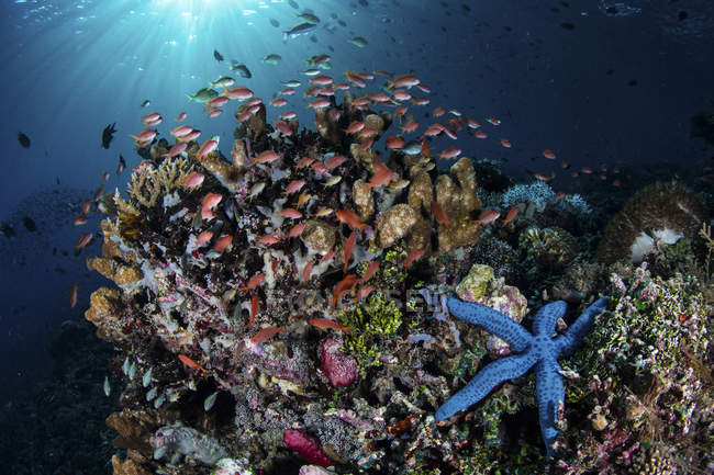 Colorful fish swimming above reef — Stock Photo