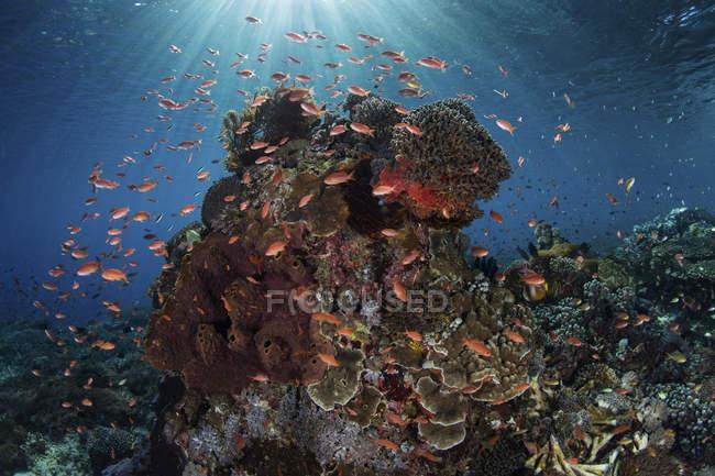 Peces de colores nadando por encima de los corales - foto de stock