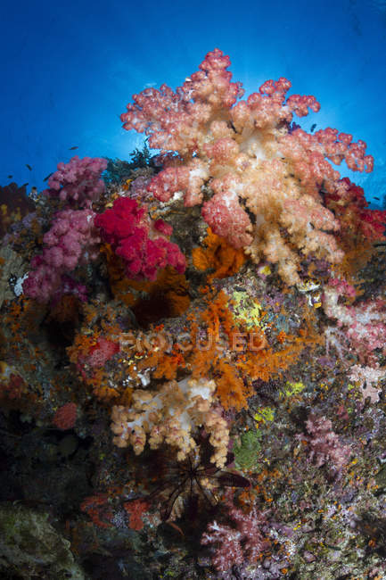 Soft corals in Raja Ampat — Stock Photo