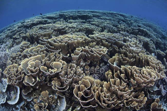 Bunte Korallen im seichten Wasser — Stockfoto