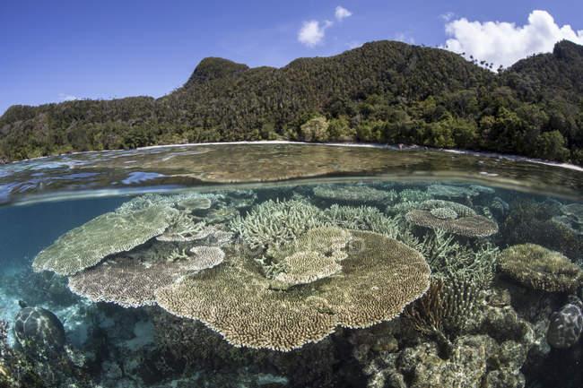 Barriera corallina vicino all'isola calcarea — Foto stock