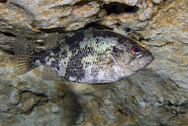Bajo de la sombra en la caverna Morrison Springs - foto de stock