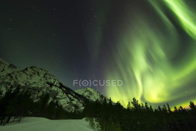 Северное сияние над гор и лесов — стоковое фото