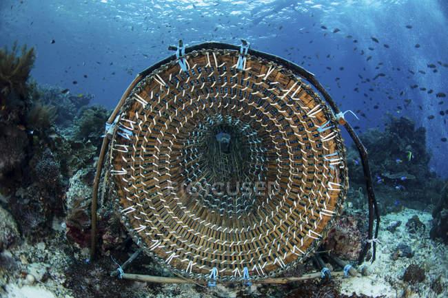 Piège à poisson traditionnel en bambou — Photo de stock