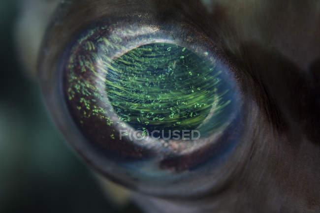 Colorful porcupinefish eye closeup shot — Stock Photo