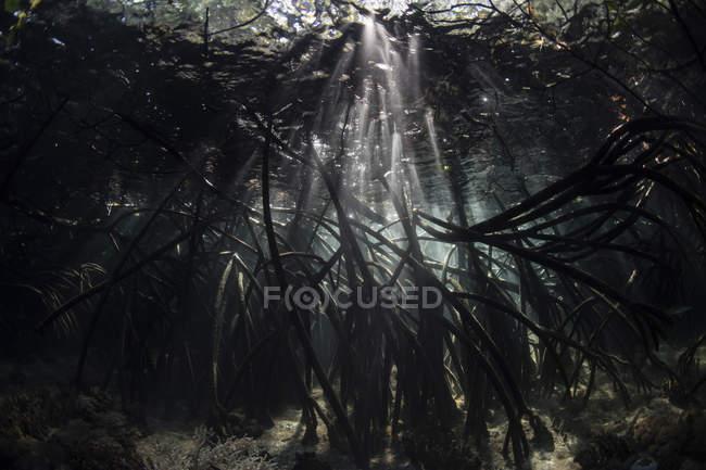 Rayons de soleil dans les ombres sous-marines de la forêt de mangroves — Photo de stock