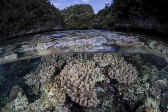 Weichkorallen in seichtem Wasser — Stockfoto