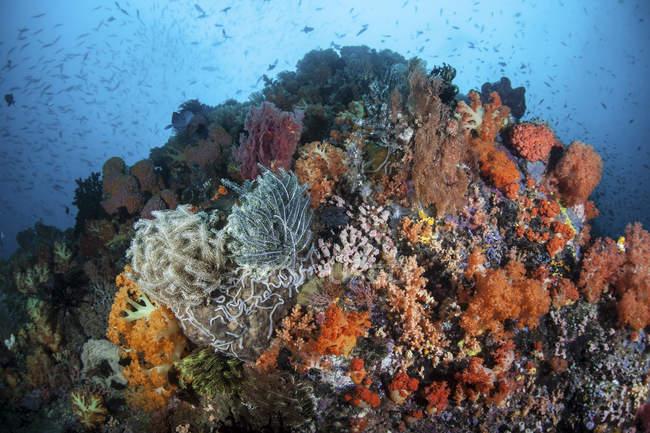Bunte Korallen wachsen auf Riff — Stockfoto