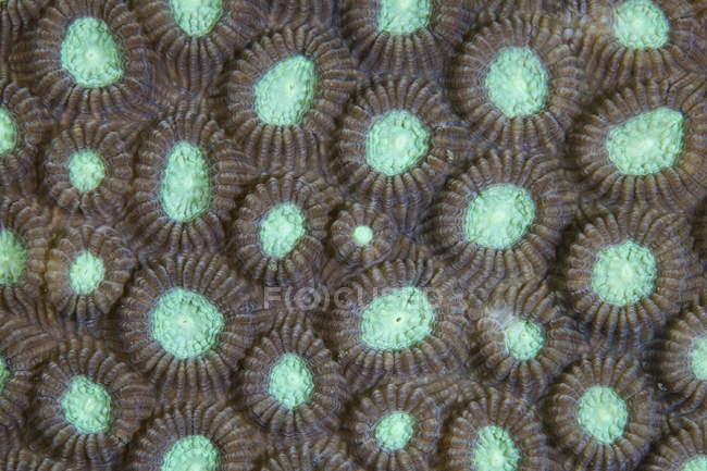 Polypes de corail de construction de récifs — Photo de stock