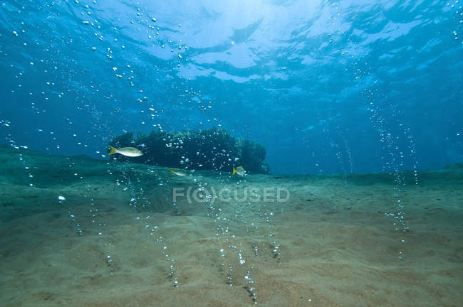 Bubbles streaming out of sandy bottom — Stock Photo