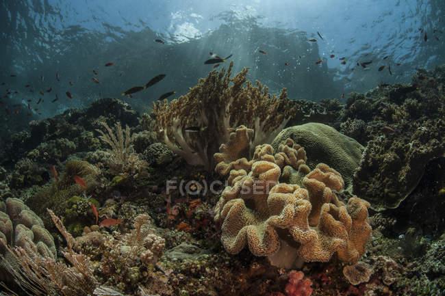 Poissons nageant au-dessus du récif corallien — Photo de stock