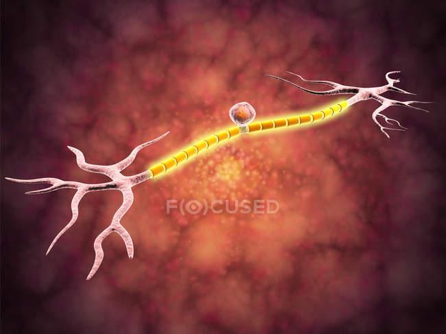 Vue colorée microscopique d'un neurone unipolaire — Photo de stock