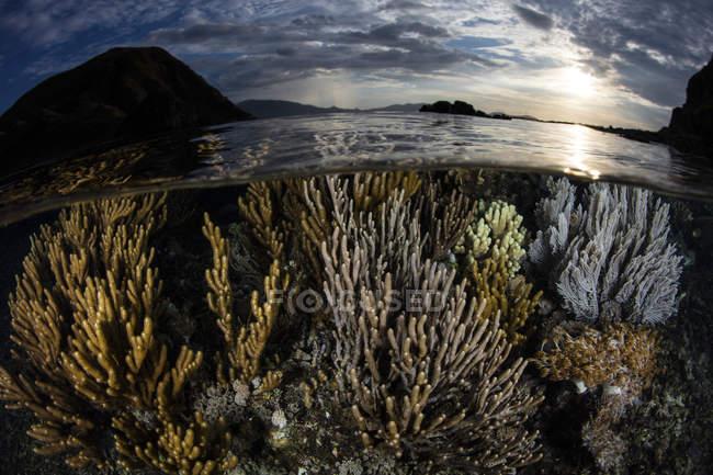 Korallen im seichten Wasser bei Sonnenuntergang — Stockfoto