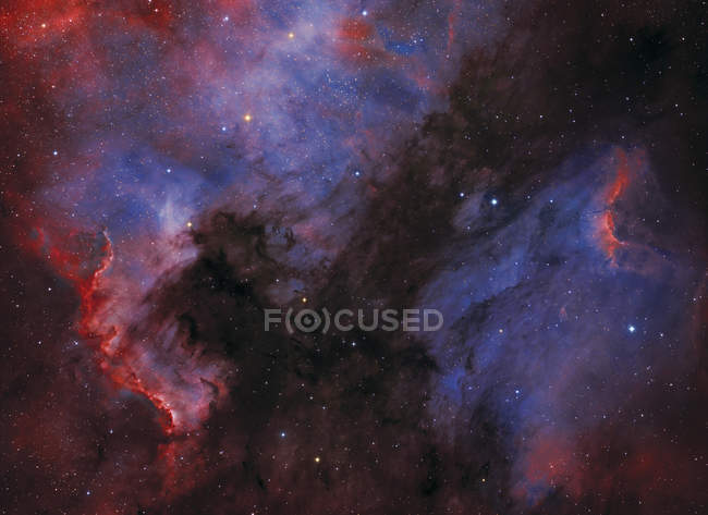 NGC7000 and Pelican nebulas in constellation Cygnus — Stock Photo