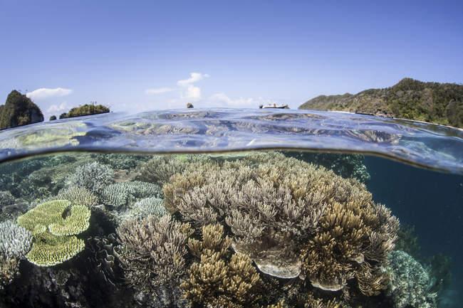 Recifes de coral perto da ilha de calcário — Fotografia de Stock