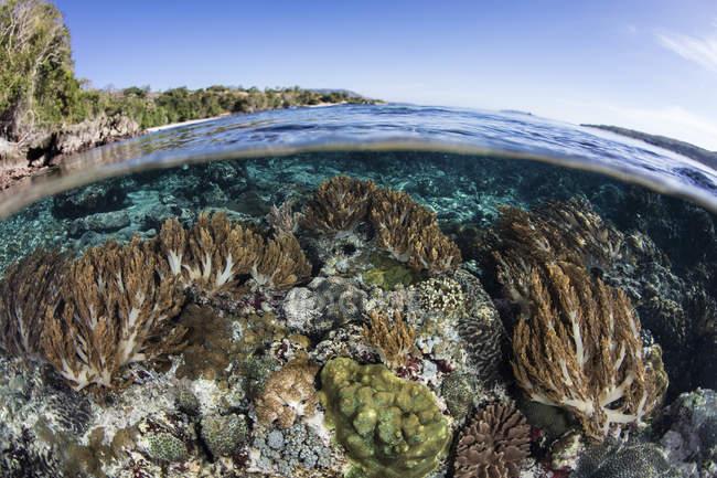 Colorido arrecife de coral en aguas poco profundas - foto de stock