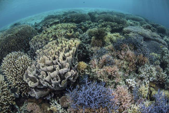 Bunte Korallen gedeihen im seichten Wasser — Stockfoto