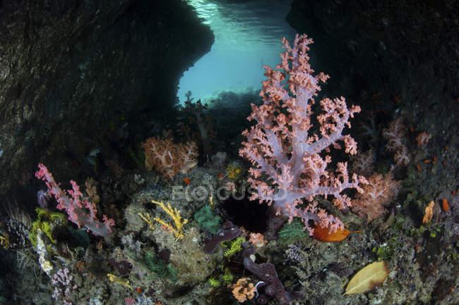 Weichkorallen wachsen auf Kalksteininsel — Stockfoto