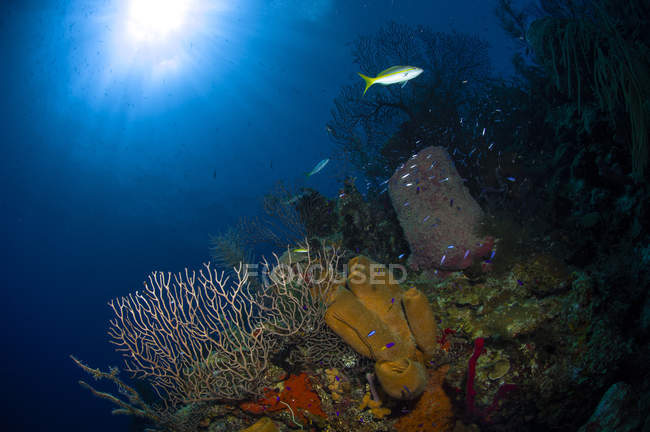 Korallen und Schwammriffe — Stockfoto
