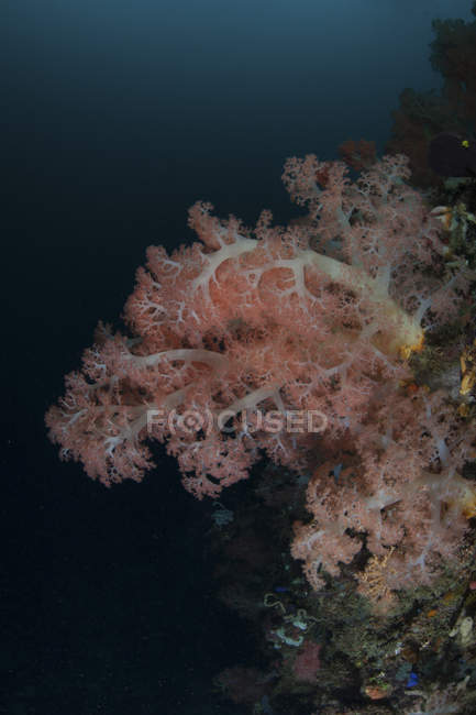 Soft corals thriving on deep reef — Stock Photo
