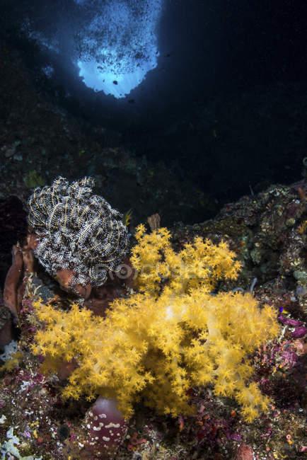 Coraux mous dans la crevasse — Photo de stock