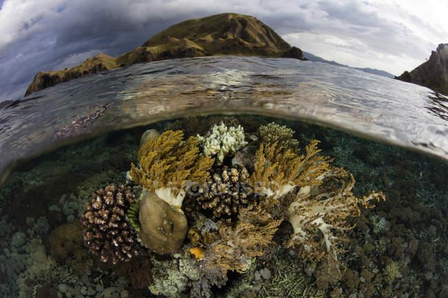 Korallen wachsen in seichtem Wasser — Stockfoto