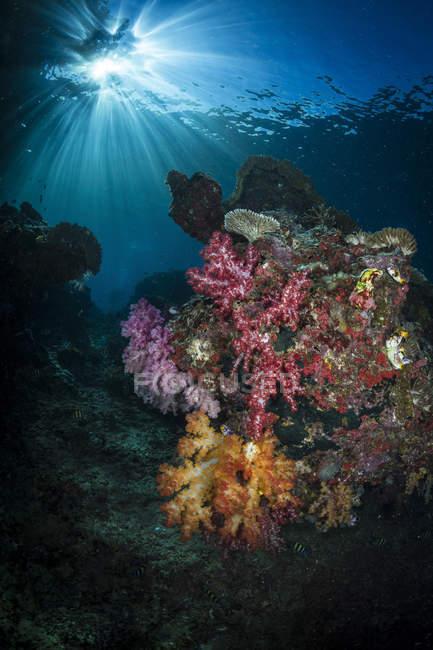 Coral suave y explosión de sol en Raja Ampat - foto de stock