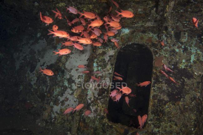 Soldado rebaño en restos de naufragio - foto de stock