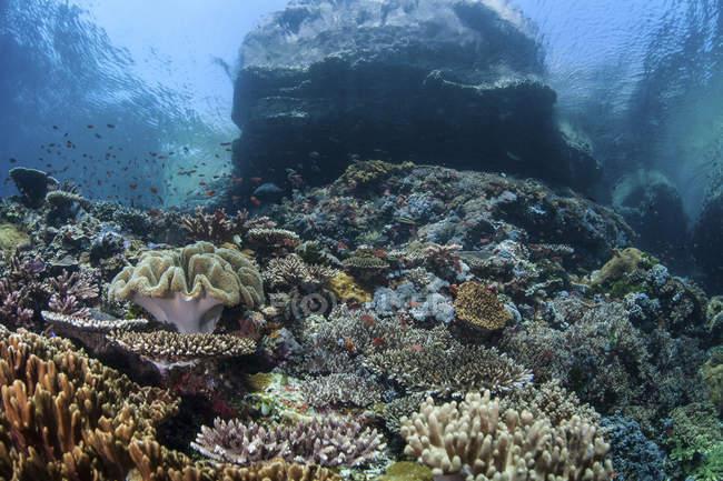 Korallenriff im Komodo-Nationalpark — Stockfoto