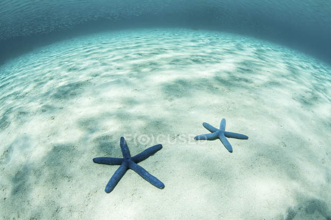 Estrella de mar sobre fondo arenoso poco profundo - foto de stock