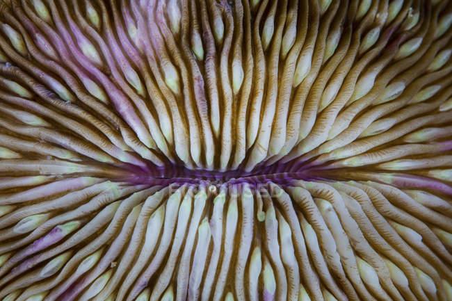Mushroom coral closeup shot — Stock Photo