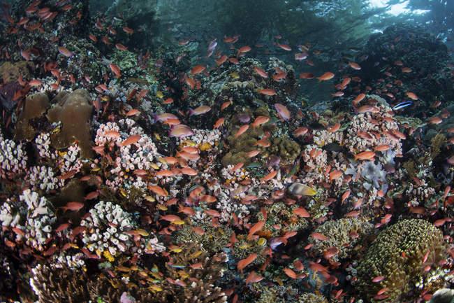 Coloridos peces nadando cerca de Alor - foto de stock