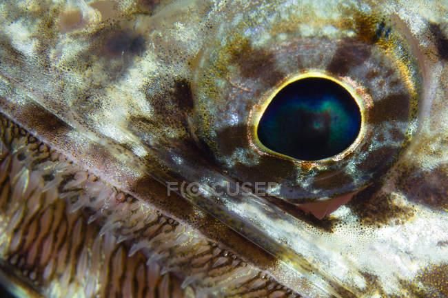 Poisons globe oculaire closeup shot — Photo de stock